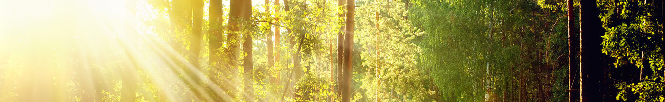 trees_banner_1365x210
